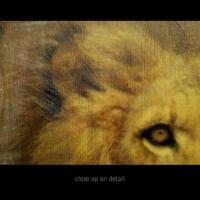 mixed.lion.detail1