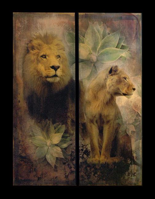 mixed.lionandlioness